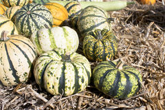 Squash and Pumpkins on a field Royalty Free Stock Photo