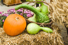 Squash and pumpkins on hay Stock Photo