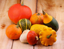 Squash and Pumpkins Royalty Free Stock Images