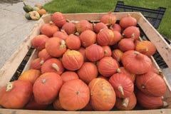 Squash and pumpkins Stock Photos
