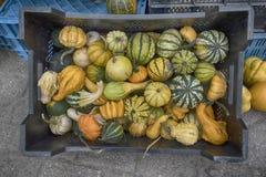 Squash and pumpkins Royalty Free Stock Photo