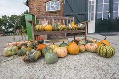 Squash and pumpkins Royalty Free Stock Photos