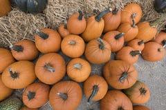 Squash and pumpkins Stock Photography