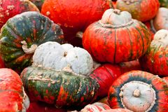 Squash Red Turban Stock Photos