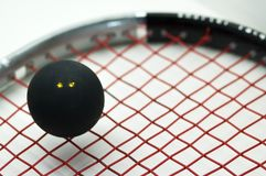 Squash sport. Double dots squash ball on racquet Royalty Free Stock Photos