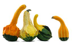Squash Standoff Stock Photography