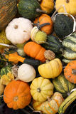 Squash varieties Royalty Free Stock Photography