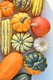 Squash vegetable collection Royalty Free Stock Image