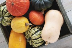 Squash vegetable selection Stock Images