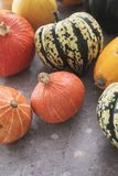 Squash vegetable selection Stock Image