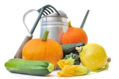 Squash and zucchini from garden Stock Image