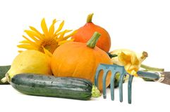 Squash and zucchini from garden Stock Photo