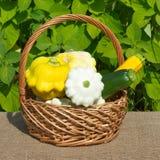 Squash and zucchini in wicker basket Stock Image