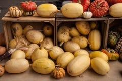 Squashar, kalebasser och pumpor på bondens marknad Arkivfoto
