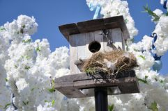 Squashbox. Caring for animals and birds, the problems of bird survival in the city. The natural environment stock images
