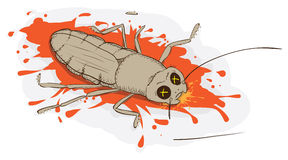 Squashed cockroach Stock Image