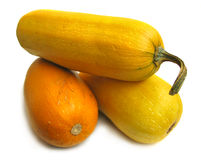 Squashes Royalty Free Stock Photography