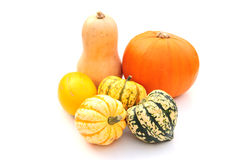 Squashes Royalty Free Stock Images