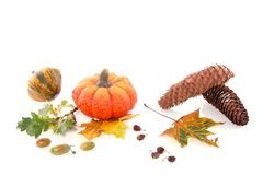 Squashes and autumn leaves Stock Photos