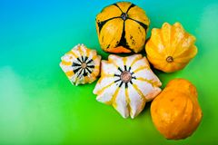 Squashes on a colored background. Stock Photos