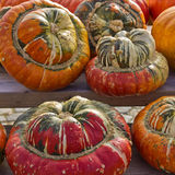 Squashes On Display Royalty Free Stock Images