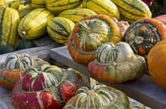 Squashes On Display Stock Photo