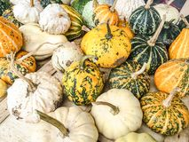 Squashes and gourds Stock Image