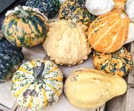Squashes and gourds Royalty Free Stock Photos
