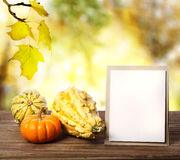 Squashes and greeting card Royalty Free Stock Images