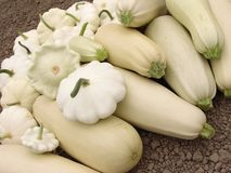 Squashes harvest Stock Photography