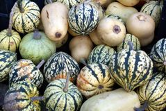 Squashes . marrows Royalty Free Stock Photos