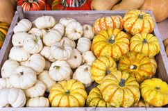 Squashes Mix Royalty Free Stock Image