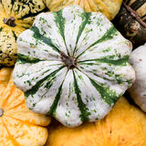 Squashes in Autumn Stock Photos