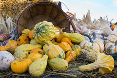 Squashes and pumpkins Stock Images