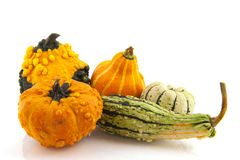 Squashes and pumpkins Stock Photo