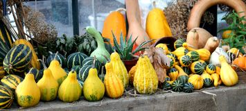 Squashes and Pumpkins. Royalty Free Stock Photo