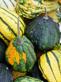Squashes and pumpkins Royalty Free Stock Image
