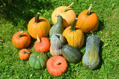 Squashes and pumpkins Royalty Free Stock Photos