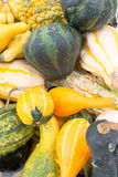 Squashes in yellow and green Royalty Free Stock Photo