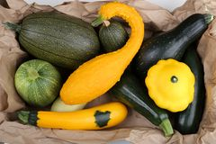 Squashes  and zucchini Stock Images