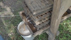 Squeezing of fresh apples in wooden press to bucket. To produce cider in village stock video