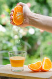 Squeezing fresh orange juice Stock Image