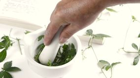 Squeezing jiaogulan herb in a mortar stock footage