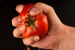 Squeezing tomato Stock Images