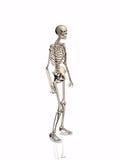 Squelette. illustration libre de droits