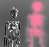 Squelette image libre de droits