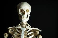 Squelette photo libre de droits