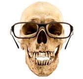 Squelette d'isolement avec des lunettes Images stock