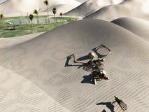 Squelette dans le désert Image stock