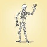 Squelette de bande dessinée Photo stock